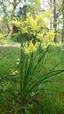 Κήπος σπιτιών Harewood Στοκ φωτογραφία με δικαίωμα ελεύθερης χρήσης
