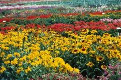 κήπος σπορείων Στοκ Εικόνες