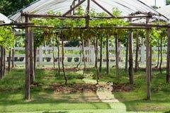 Κήπος σταφυλιών Στοκ φωτογραφία με δικαίωμα ελεύθερης χρήσης