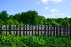 Κήπος στα ξύλα Στοκ Φωτογραφία