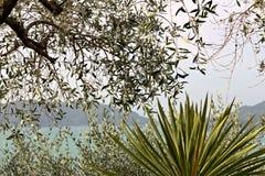 Κήπος στην από τη Λιγουρία θάλασσα κοντά στο Cinque Terre στοκ εικόνα με δικαίωμα ελεύθερης χρήσης