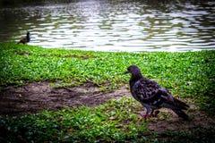 Κήπος στην Ταϊλάνδη Chatuchak 57 Στοκ εικόνα με δικαίωμα ελεύθερης χρήσης