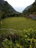 Κήπος στο εξοχικό σπίτι Στοκ Εικόνες