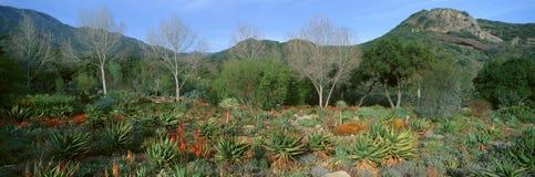 Κήπος στο κέντρο για τις γήινες ανησυχίες, Ojai, Καλιφόρνια στοκ φωτογραφία με δικαίωμα ελεύθερης χρήσης