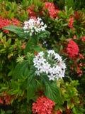 Κήπος στο Μαϊάμι, Φλώριδα Ηνωμένες Πολιτείες Στοκ Εικόνες