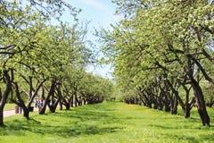 Κήπος της Apple - εικόνα watercolor στοκ φωτογραφία με δικαίωμα ελεύθερης χρήσης
