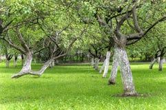 Κήπος της Apple στα τέλη του καλοκαιριού Στοκ εικόνα με δικαίωμα ελεύθερης χρήσης