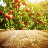 Κήπος της Apple των δέντρων και των φρούτων Στοκ Φωτογραφία