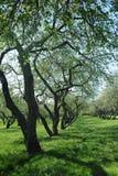 Κήπος της Apple Στοκ Εικόνες