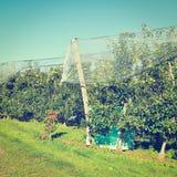 Κήπος της Apple Στοκ Φωτογραφία