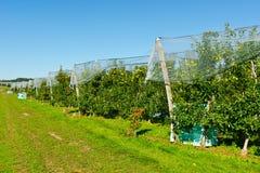 Κήπος της Apple Στοκ φωτογραφία με δικαίωμα ελεύθερης χρήσης