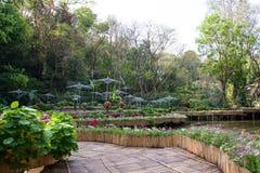 Κήπος της Mae Fah Luang, DoiTung Στοκ Εικόνες