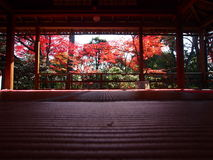 Κήπος της Zen, ιαπωνικός κήπος, ναός Κιότο Myoshinji Στοκ εικόνα με δικαίωμα ελεύθερης χρήσης