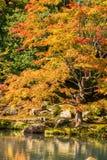 Κήπος της Zen στο ναό Tenryu-tenryu-ji στην εποχή φθινοπώρου Στοκ φωτογραφία με δικαίωμα ελεύθερης χρήσης