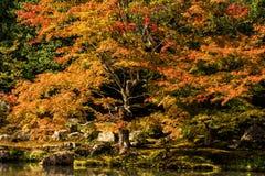 Κήπος της Zen στο ναό Tenryu-tenryu-ji στην εποχή φθινοπώρου Στοκ Φωτογραφίες