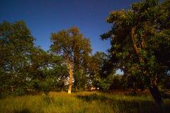Κήπος τη νύχτα Στοκ φωτογραφίες με δικαίωμα ελεύθερης χρήσης