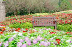 Κήπος τοπίων και ζωηρόχρωμα λουλούδια Στοκ Εικόνες