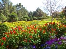 Κήπος του Βούδα, Νέο Δελχί Στοκ Εικόνα