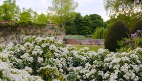 Κήπος του λευκού Στοκ εικόνα με δικαίωμα ελεύθερης χρήσης