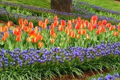 Κήπος τουλιπών στοκ φωτογραφία με δικαίωμα ελεύθερης χρήσης