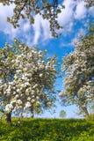 Κήπος του μήλου ανθών στοκ φωτογραφία