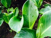 Κήπος του φύλλου Στοκ Εικόνες