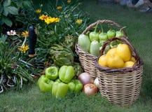 κήπος τροφίμων οργανικός Στοκ Φωτογραφίες