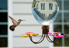 κήπος τροφοδοτών humminbird Στοκ Φωτογραφίες