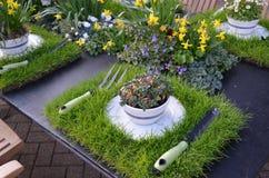Κήπος τσαγιού. Στοκ Φωτογραφία