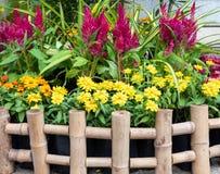 Κήπος τσεπών με το κόκκινο cokckscomb στοκ εικόνα
