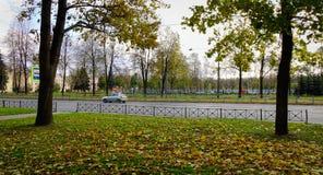 Κήπος φθινοπώρου στη Αγία Πετρούπολη, Ρωσία Στοκ εικόνα με δικαίωμα ελεύθερης χρήσης