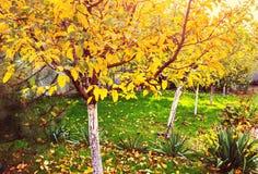 Κήπος φθινοπώρου Στοκ Εικόνες