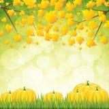 Κήπος φθινοπώρου απεικόνιση αποθεμάτων