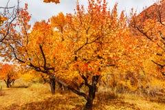 Κήπος φθινοπώρου Στοκ φωτογραφίες με δικαίωμα ελεύθερης χρήσης