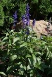 κήπος φυσικός Στοκ εικόνα με δικαίωμα ελεύθερης χρήσης