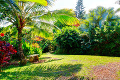κήπος Χαβάη Maui Ίντεν Στοκ εικόνα με δικαίωμα ελεύθερης χρήσης
