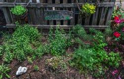 Κήπος χορταριών Στοκ εικόνες με δικαίωμα ελεύθερης χρήσης