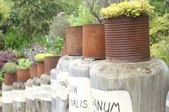 Κήπος χορταριών Στοκ Φωτογραφίες