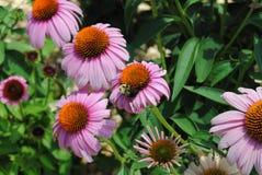 Κήπος χρονικών λουλουδιών άνοιξη Στοκ φωτογραφίες με δικαίωμα ελεύθερης χρήσης