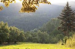 Κήπος χώρας το καλοκαίρι στοκ εικόνες