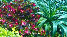 Κήπος λόφων NA BA Στοκ εικόνες με δικαίωμα ελεύθερης χρήσης