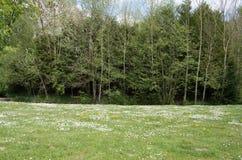Κήπος 24 Στοκ εικόνα με δικαίωμα ελεύθερης χρήσης