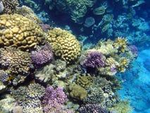 κήπος 7 κοραλλιών Στοκ Φωτογραφίες