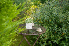 Κήπος Στοκ Εικόνα