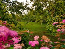 Κήπος Στοκ Εικόνες