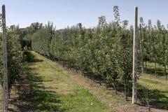 Κήπος Apple-δέντρων στα βουνά Στοκ Εικόνα