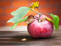 Κήπος Apple Στοκ Εικόνα