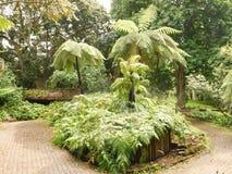 Κήπος Cycad στοκ φωτογραφίες