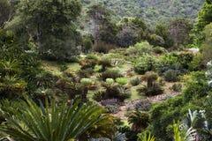 Κήπος Cycad Στοκ φωτογραφία με δικαίωμα ελεύθερης χρήσης