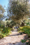 Κήπος Gethsemane στο υποστήριγμα των ελιών Στοκ φωτογραφία με δικαίωμα ελεύθερης χρήσης